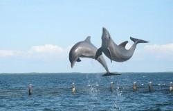 Dolphin safari / dolphin watching Nazare